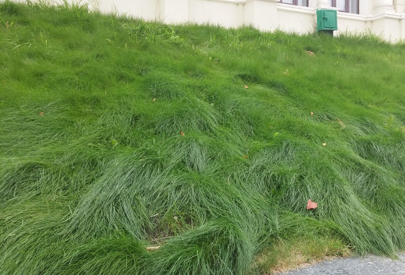 трава мурава фото