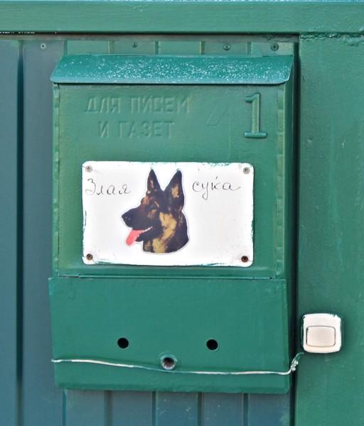 Собачья жизнь картинки из фильма